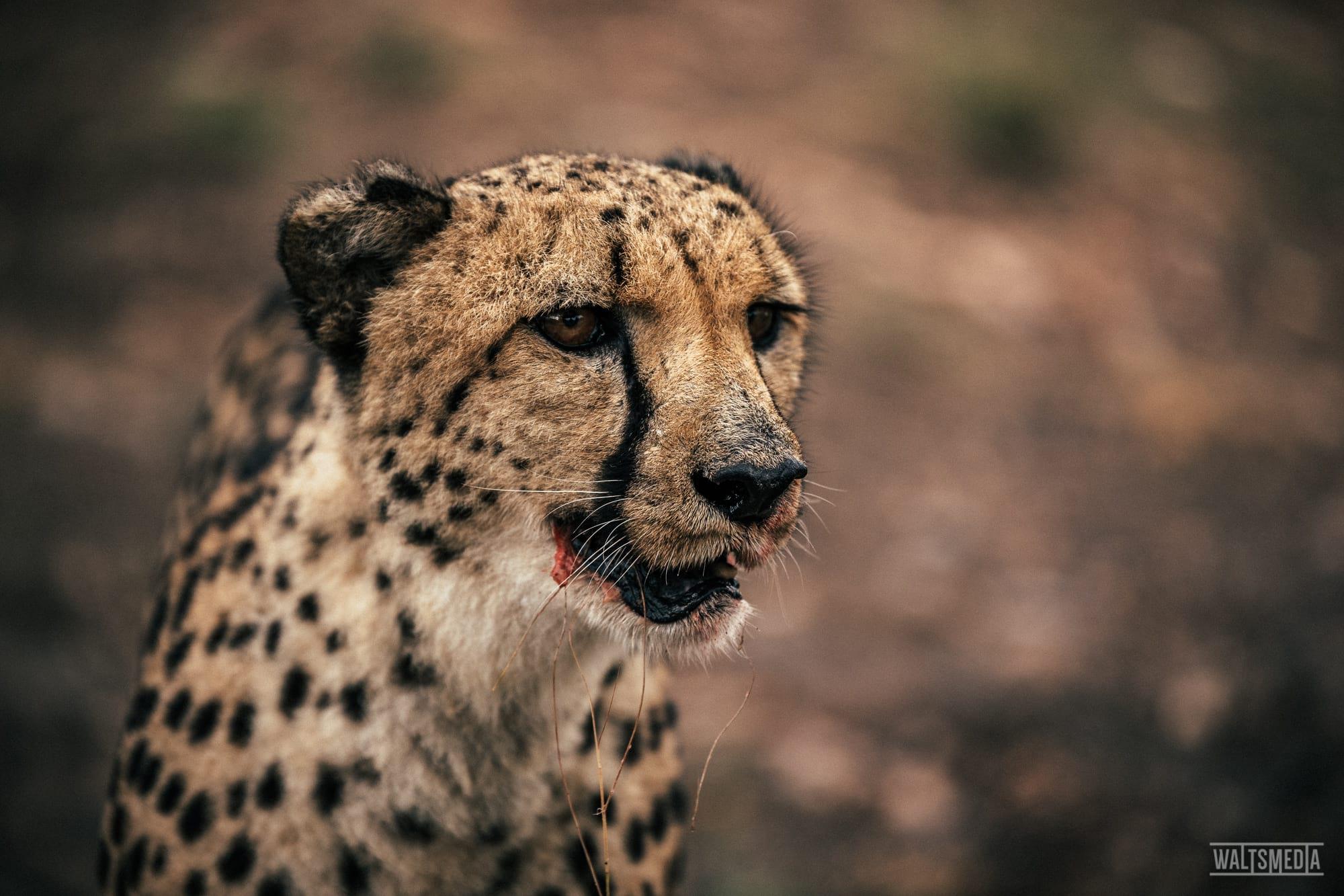 waltsmedia-namibia-travel-portrait-103