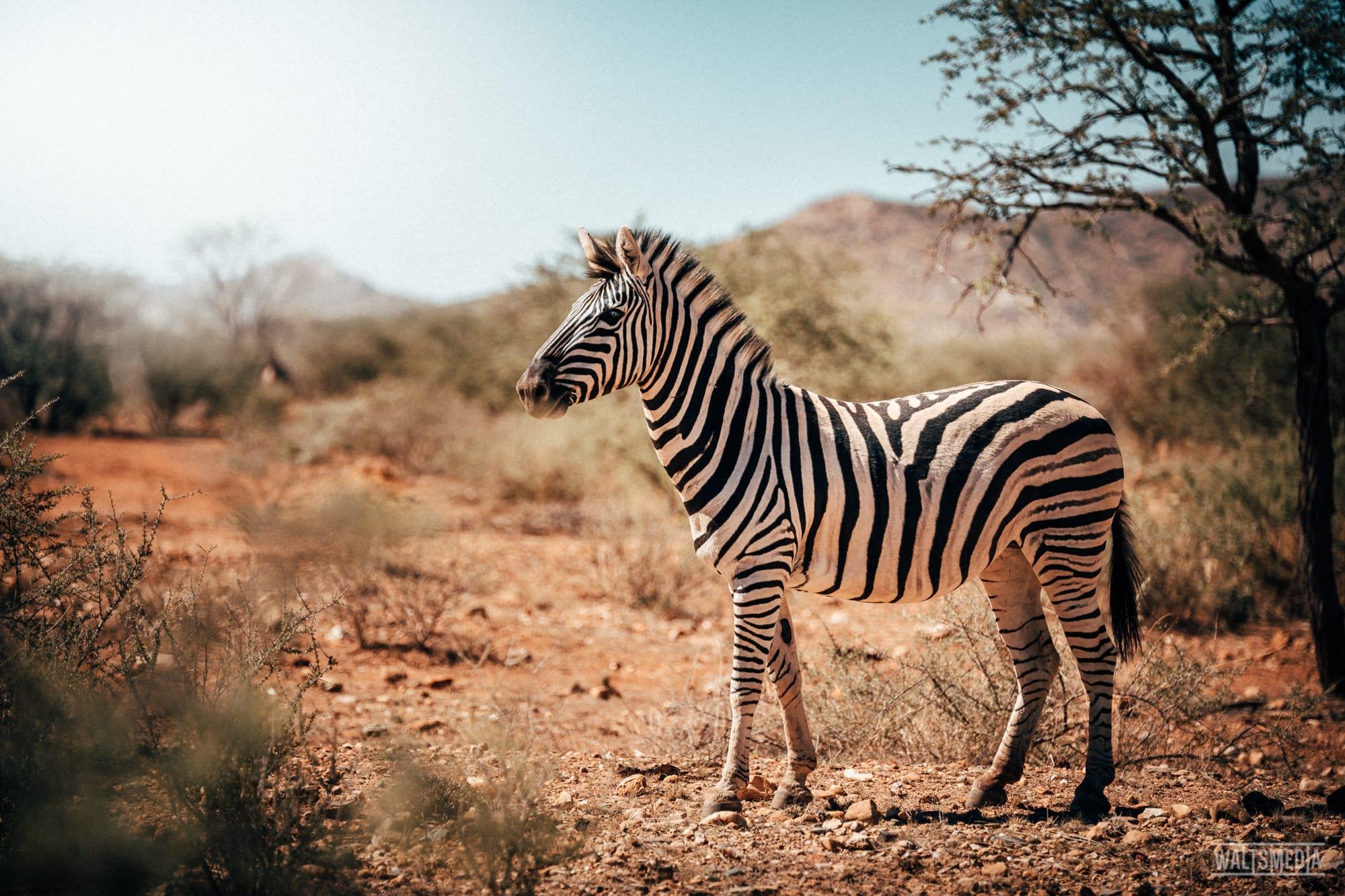 waltsmedia-namibia-travel-portrait-3