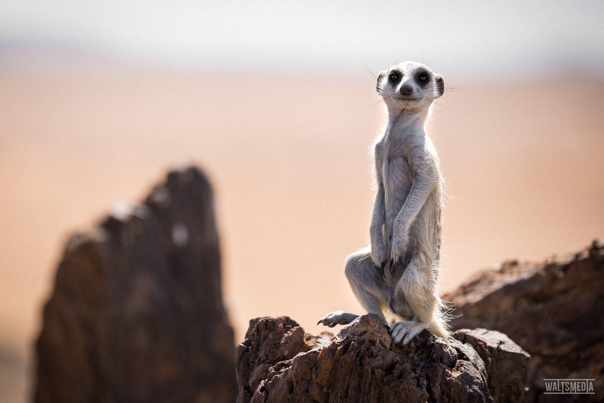 waltsmedia-namibia-travel-portrait-65-26