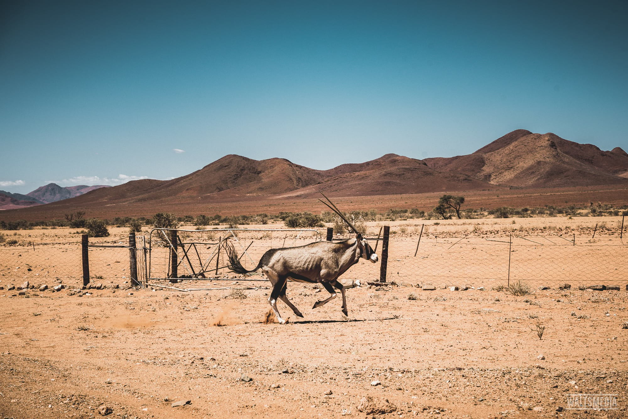 waltsmedia-namibia-travel-portrait-67