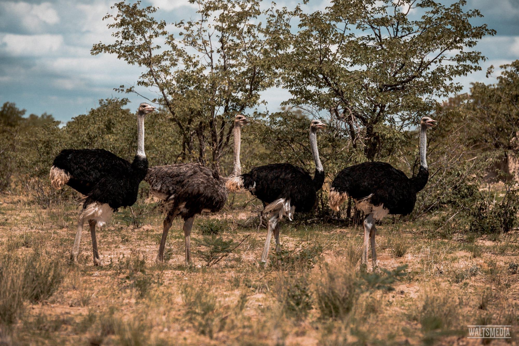 waltsmedia-namibia-travel-portrait-79
