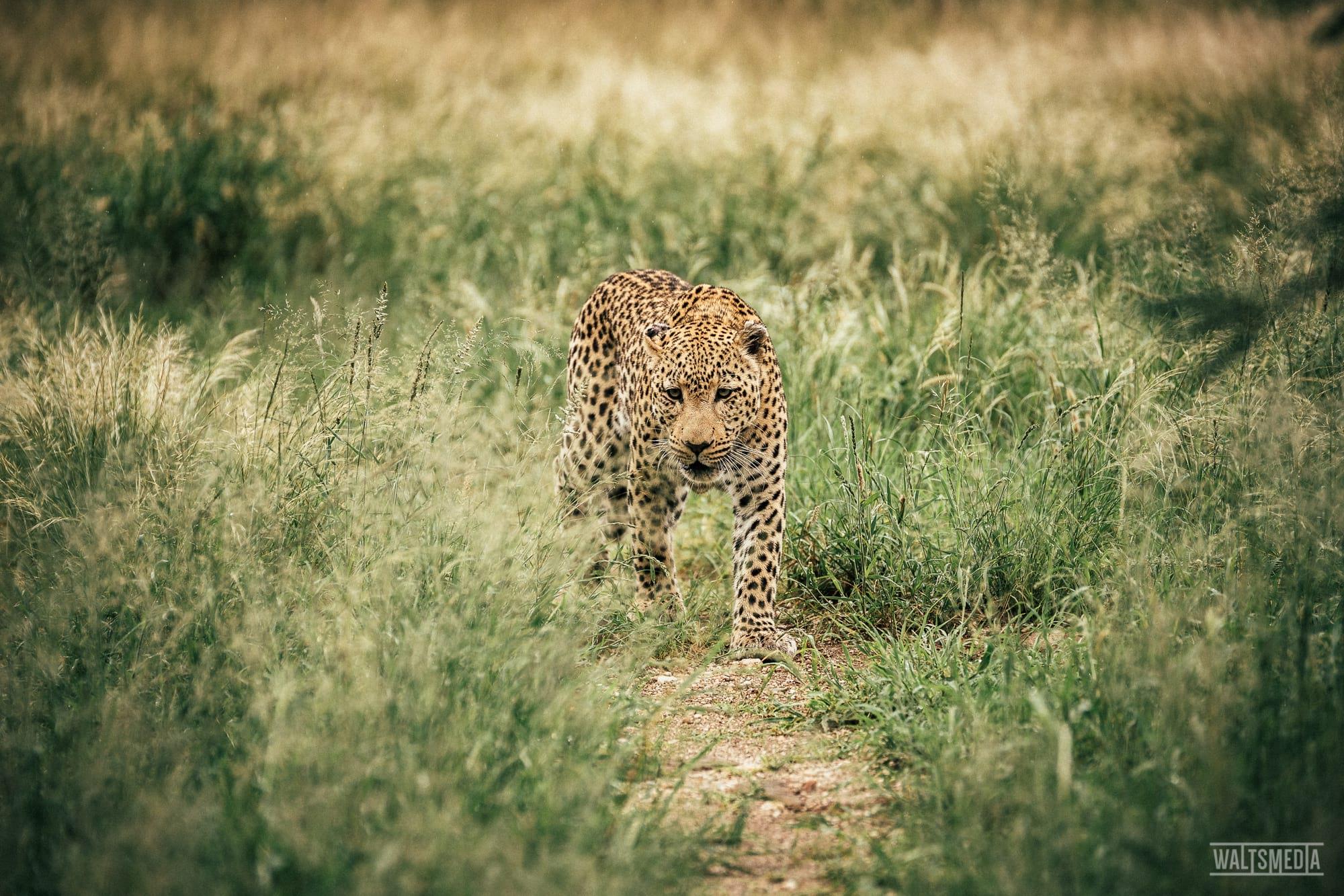 waltsmedia-namibia-travel-portrait-99