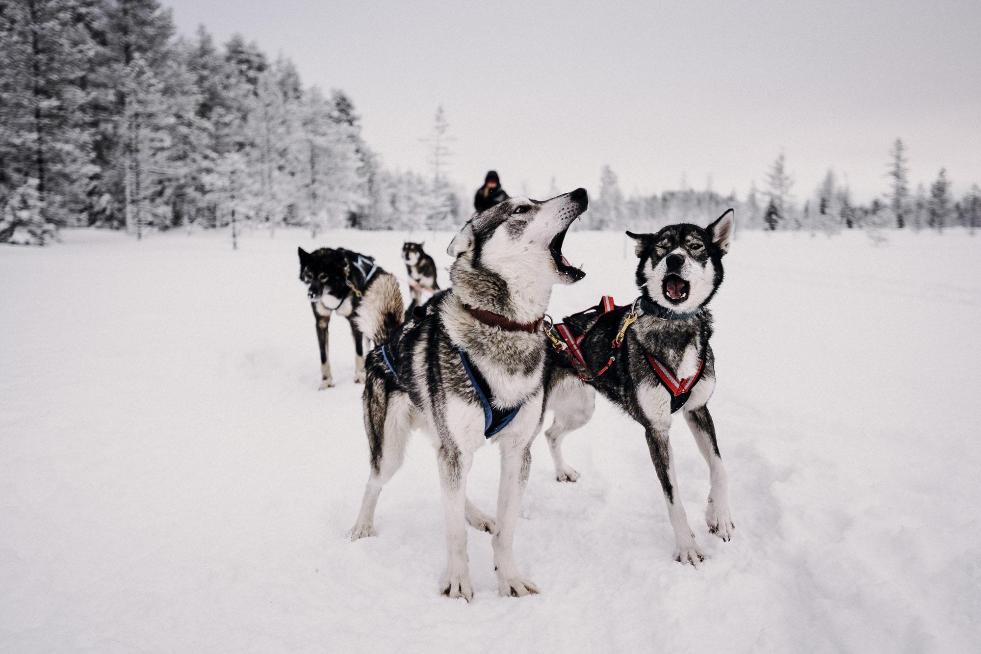 waltsmedia-portrait-finland-kuusamo-lapland-3-1